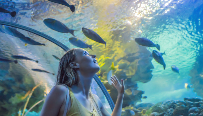 1594659435_aquarium.jpg